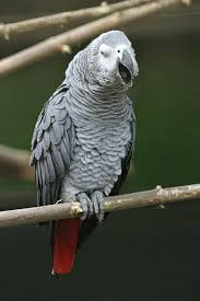 Pet shop ,,Zoo Amazona'' Images?q=tbn:ANd9GcRhFXBQTlkolZyzCt04L_LoC_n10iklcSBzrqRSXtBLFXu4lPyH6A
