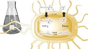 biosynpathnylon jpg