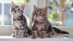 pictures of newborn kittens cute babies baby kittens wallpaper
