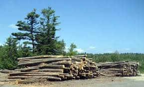 timber harvesting ma massachusetts central mass tree inc