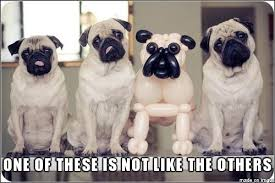 Sad Pug Meme - funny archives page 12 of 18 pug meme funny cute pugs