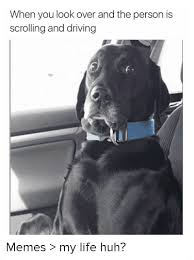 Dog Driving Meme - when you look over and the person is scrolling and driving memes