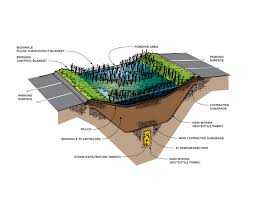 conrad gartz bioswale illustration for new york city urban green