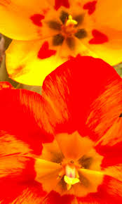 191 best color my favorites orange u0026 yellow images on pinterest