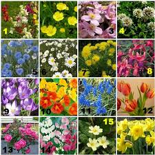 common uk garden flowers pictures quiz by crafty quilter