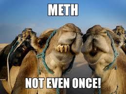 Camel Memes - our memes obscene news