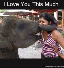 I Love You This Much Meme - funny images of i love you this much impremedia net