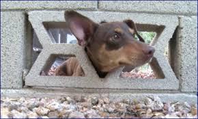 Decorative Cinder Blocks Dog Freed After Getting Head Stuck In Decorative Cinder Block