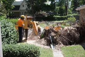 M M Landscaping by M U0026m Tree Service Stump Removal Youtube