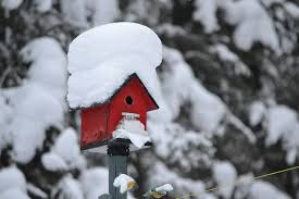 Backyard Bird Store Should I Take My Bird House Down For The Winter The Gilligallou