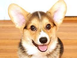 Canine Creature Comforts Creature Comforts