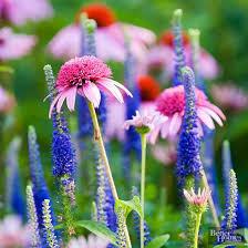 best 25 perennial flowers for shade ideas on pinterest