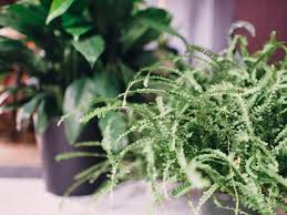 Fern Decor by Rules For Decorating With Faux Plants Hgtv U0027s Decorating U0026 Design
