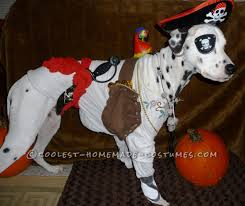 cool homemade pirate costume for a dog homemade pirate costumes