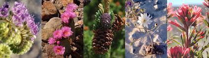 native plants in the desert plants death valley national park u s national park service