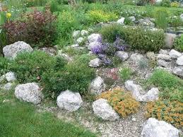 giardini rocciosi in ombra giardini rocciosi fai da te progettazione giardini giardini