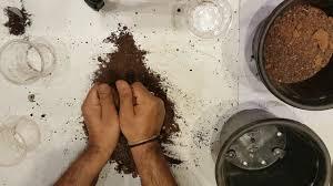 Vegetable Garden Soil Mix by Soil Mix For Kitchen Gardening In Telugu To Grow Organic Gardening
