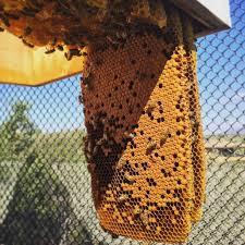 Raising Bees In Backyard by Beekeeping Like A 10 Mistakes New Beekeepers Make
