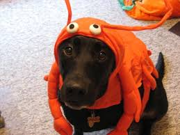 Extra Large Dog Halloween Costumes Lobster Dog Halloween Costume Casual Canine