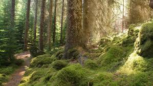 100 glen affric estate conservation weeks glen affric trees
