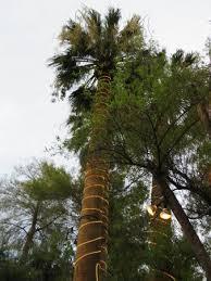 decorative trees picture of el encanto mexican patio cafe cave