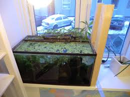 aquaponics fish tank the sustainable food system which is aquaponics