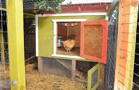chicken coops choosing the right one backyard chicken zone