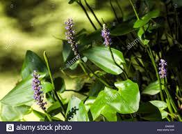 florida native plant florida native plants stock photos u0026 florida native plants stock
