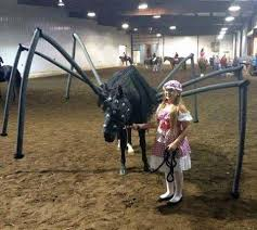 Dog Spider Halloween Costume Hilarious Horse Halloween Costumes Craziest