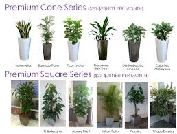 indoor plants singapore plant rental vitae plants an eco and horti enterprise providing