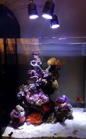 Floating Aquascape Reef2reef Saltwater And Reef Aquarium Forum - ignasi torralba u0027s 16 gallon nano reef home fish and tanks