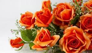 send cheap flowers in clour best florist in pune send flowers in pune cheap