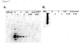 patent ep2623610b1 labeling and detection of post