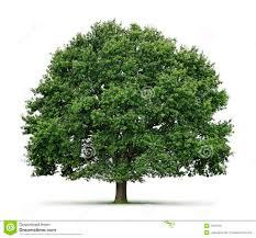 oak tree puppet ideas tree plays pinterest oak tree
