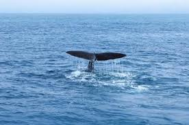 Whale Watches Cape Cod - 25 best things to do in cape cod massachusetts