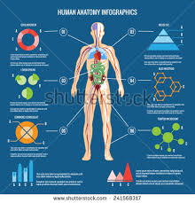 Outline The Anatomy And Physiology Of The Human Body Human Body Anatomy Stock Images Royalty Free Images U0026 Vectors