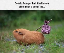 Gopher Meme - the daily blubb donald trump meme donald trump memes donald trump