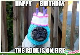 Happy Birthday Meme Dog - happy birthday wishes for your facebook friends