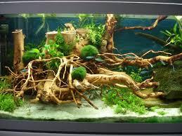 Aquascape Construction Epoxy 20 Best Aquascaping Images On Pinterest Aquascaping Aquariums