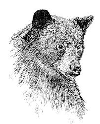drawing animals in pen and ink art pinterest drawings