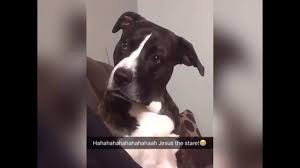Confused Dog Meme - dog gives owner the most evil stare funny video youtube