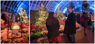 phipps conservatory christmas lights a winter marriage proposal phipps conservatory krystal healy