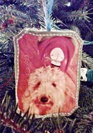 christmas tree go jules go