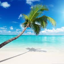 Palm Tree Wallpaper Palm Tree Beach Hd Desktop Wallpaper Widescreen High