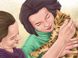 3 ways to take care of a bengal cat wikihow