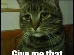 Sad Okay Meme - okay cat weknowmemes