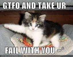 Happy New Year Cat Meme - happy new year mainelyhopeful