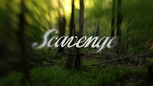 Gabrielle Hamilton Twitter Scavenging The Forest With Gabrielle Hamilton Youtube