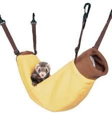 Banana Hammock Meme - cool banana hammock meme ferret in hammock kayak wallpaper