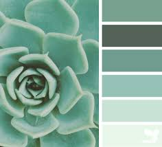 color heaven seeds color inspiration and design seeds
